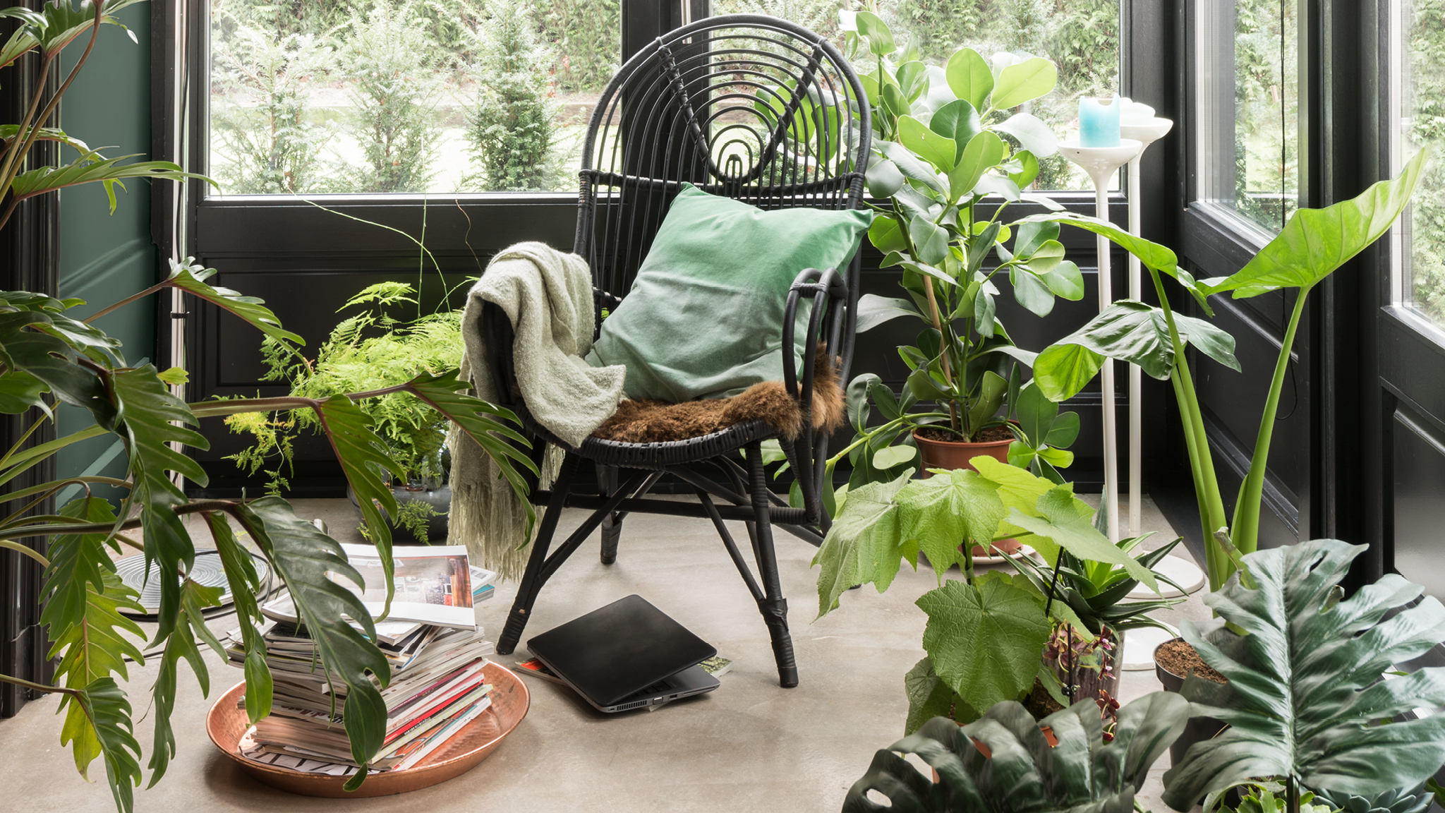 Add to the rich atmosphere of a room of plants by using a varied palette of greens.