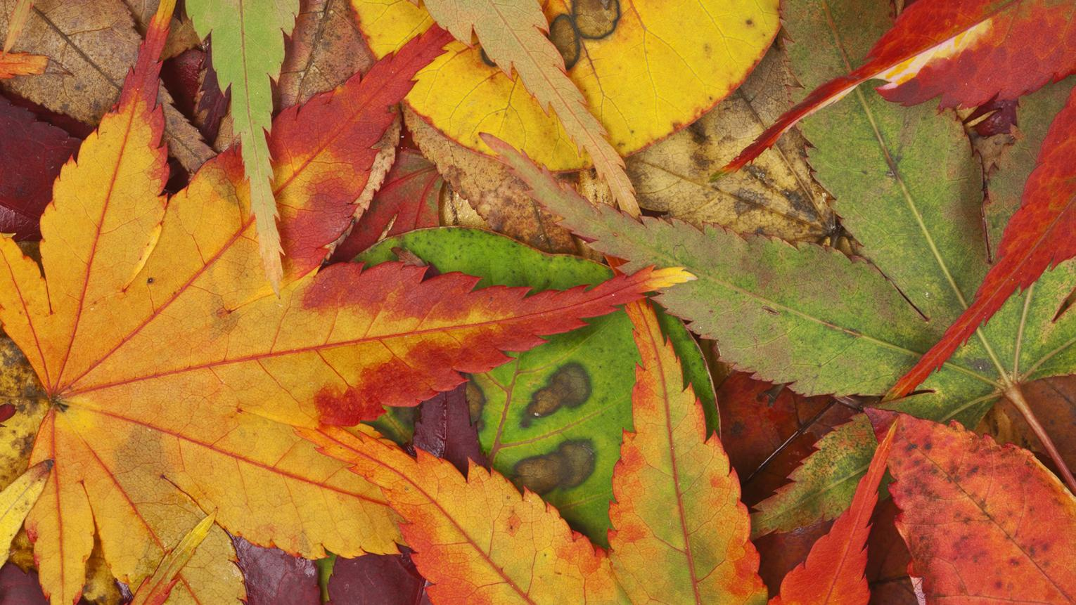 Nature's display of colours in autumn is a seasonal spectacle. Read our tips for decorating with dazzling displays of autumn colour.